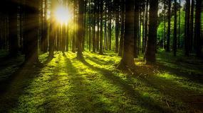 Zakaz wstępu do lasów na terenie Nadleśnictwa Jabłonna