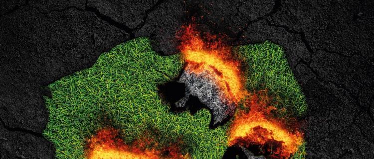 Wypalanie traw to plaga! NIe niszcz środowiska!