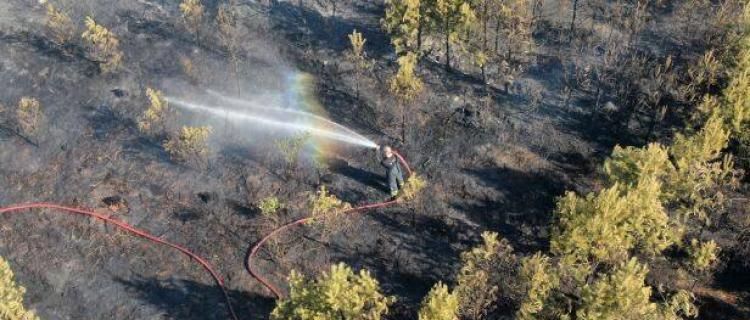 29 zastępów straży pożarnej i 113 ratowników gasiło wczorajszy pożar lasu przy ul. Zakopiańskiej