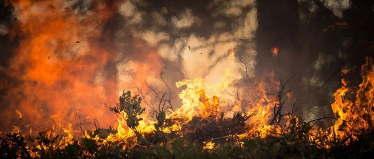 Płonie las pod Kobiałką w Gminie Nieporęt w powiecie legionowskim.