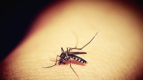 Komary atakują powiat legionowski. Jakie są sposoby na komary?