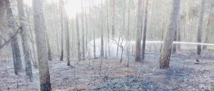 15 jednostek straży gasi pożar lasu w Legionowie. Działania wspomaga samolot